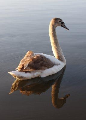 2009 - Winner, Birds, taken by Mark Hodson